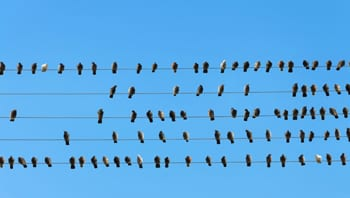Birds on a wire to illustrate community groups